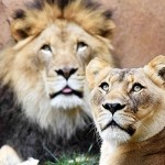 Save On Admission To Brookfield Zoo (Chicagoland)